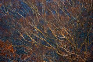 晩秋の森の写真素材 [FYI03840007]