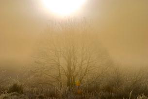 霧氷の朝の写真素材 [FYI03840008]