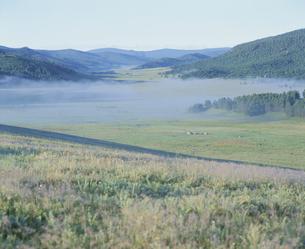 朝霧の平原 モンゴルの写真素材 [FYI03840021]