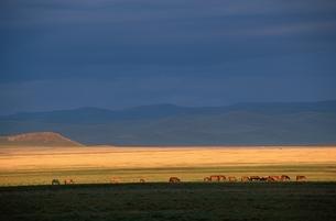 草原の夕景と馬の群れ モンゴルの写真素材 [FYI03840040]