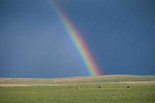 草原と虹 モンゴルの写真素材 [FYI03840045]