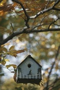 鳥小屋の写真素材 [FYI03840304]