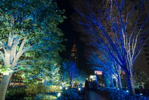 新宿サザンテラスのクリスマスイルミネーションの写真素材 [FYI03840838]