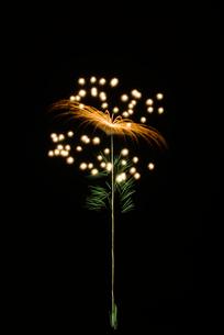 常総きぬ川花火大会 メッセージ花火 昇木葉付たんぽぽの写真素材 [FYI03840973]