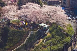 桜咲く飛鳥山公園とモノレール「アスカルゴ」の写真素材 [FYI03841307]