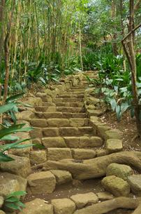 都会のオアシス名主の滝公園の石段の写真素材 [FYI03841461]
