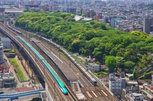 新緑の東京を走る東北新幹線E5系はやぶさの写真素材 [FYI03841485]