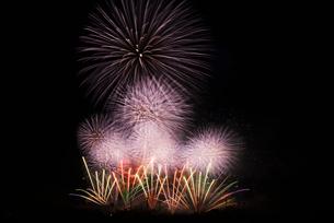 いせはら芸術花火大会のグランドフィナーレメロディ花火の写真素材 [FYI03841610]