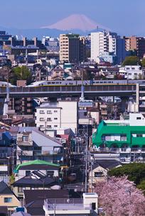 富士山と桜咲く青空の東京を走る2階建て上越新幹線E4系Maxの写真素材 [FYI03841626]