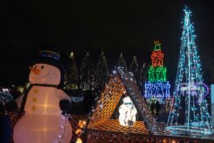 足立区元渕江公園の光の祭典クリスマスツリーイルミネーションの写真素材 [FYI03841654]