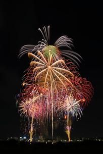 とりで利根川大花火のフィナーレで盛夏のにぎわいの写真素材 [FYI03841776]