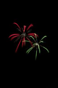 常総きぬ川花火大会の花火GALLERYで牡丹八方咲の写真素材 [FYI03841807]