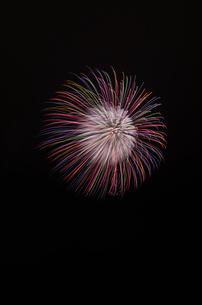 常総きぬ川花火大会 昇小花 銀芯ステンド牡丹の写真素材 [FYI03842102]