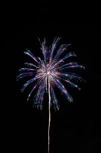 いばらきまつり花火で10号玉の時差式八方咲の写真素材 [FYI03842186]