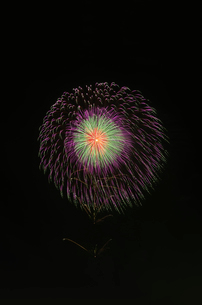 土浦全国花火競技大会で昇曲導付三重芯引先紫緑点滅の写真素材 [FYI03842215]