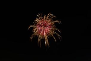 いばらきまつり花火で10号玉の錦八方黄金点滅の写真素材 [FYI03842234]
