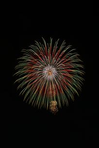 常総きぬ川花火大会の昇曲付八重芯紅緑レモン牡丹の写真素材 [FYI03842330]