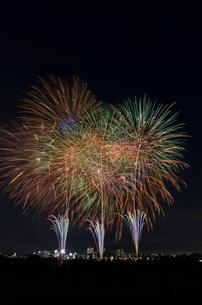 とりで利根川大花火 菊花壇の写真素材 [FYI03842551]