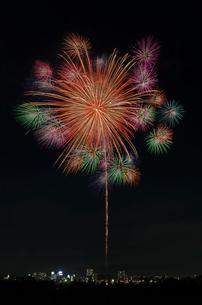 とりで利根川大花火 尺玉のパレードの写真素材 [FYI03842552]