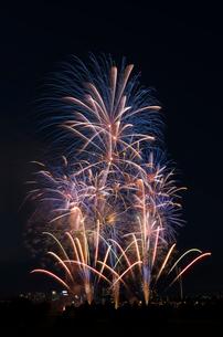 とりで利根川大花火 夏色ファンタジーの写真素材 [FYI03842554]
