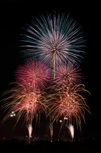 とりで利根川大花火 ブルーミングの写真素材 [FYI03842558]