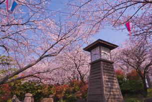 飛鳥山公園の桜と時計台 徳川吉宗享保の改革 日本最初の公園の写真素材 [FYI03842569]
