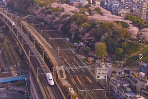 東京を走る東北・上越新幹線E2系と飛鳥山公園の桜の写真素材 [FYI03842572]