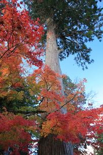 紅葉の木々の写真素材 [FYI03843178]