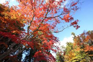紅葉の木々の写真素材 [FYI03843181]
