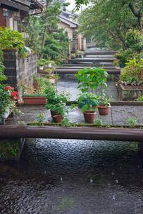 雨降る地蔵川と生活の小橋の写真素材 [FYI03843744]
