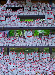 豪徳寺境内の招き猫の写真素材 [FYI03844029]
