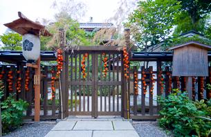 神田の家の遠藤家旧店舗住宅主屋とホオズキの写真素材 [FYI03844072]