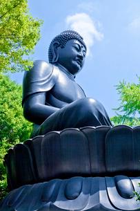 乗連寺の東京大仏の写真素材 [FYI03844135]