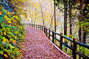 都民の森のセラピーロードと紅葉の写真素材 [FYI03844239]