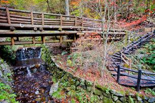都民の森の丸太橋と遊歩道の写真素材 [FYI03844240]