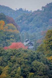 山間の中の長谷寺本堂を望むの写真素材 [FYI03844662]