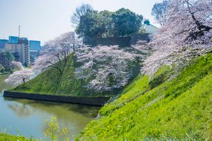 牛ガ淵のソメイヨシノと日本武道館の写真素材 [FYI03844699]