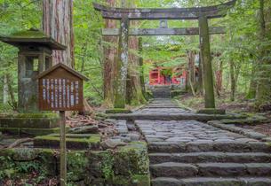 滝尾神社の運試し鳥居と楼門への参道の写真素材 [FYI03844790]