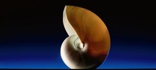 貝の写真素材 [FYI03844882]