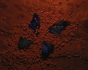 蝶の写真素材 [FYI03844891]