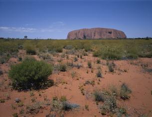 エアーズロックを眺める風景 オーストラリアの写真素材 [FYI03844960]
