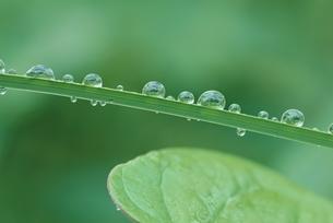 水滴の写真素材 [FYI03846116]