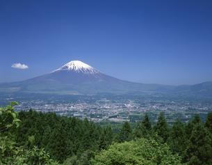 乙女岬からの富士山 御殿場市 静岡県の写真素材 [FYI03846157]