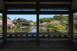春の平安神宮神苑 紅しだれ桜の写真素材 [FYI03846604]