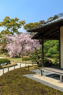 城南宮 桜咲く桃山の庭の写真素材 [FYI03846629]