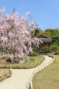 城南宮 桜咲く桃山の庭の写真素材 [FYI03846630]