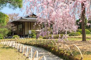 城南宮 桜咲く桃山の庭の写真素材 [FYI03846633]