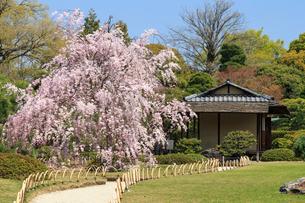 城南宮 桜咲く桃山の庭の写真素材 [FYI03846635]