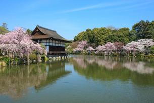 春の平安神宮神苑 紅しだれ桜と貴賓館の写真素材 [FYI03846705]