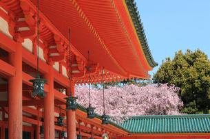 春の平安神宮 紅しだれ桜の写真素材 [FYI03846718]